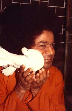 Sathya Sai Baba holding a white dove